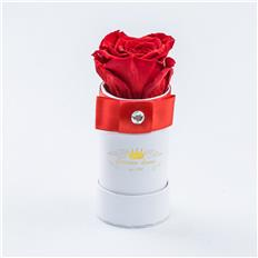 Single Deluxe rose Red